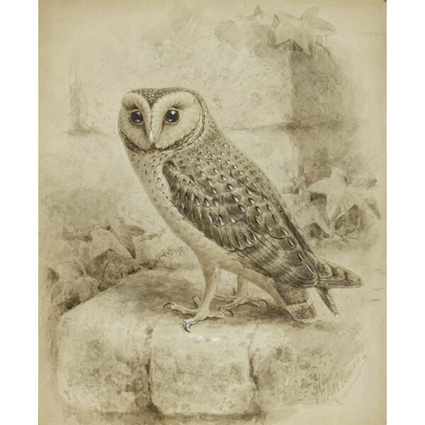 Keulemans, Natural History Study of Owl