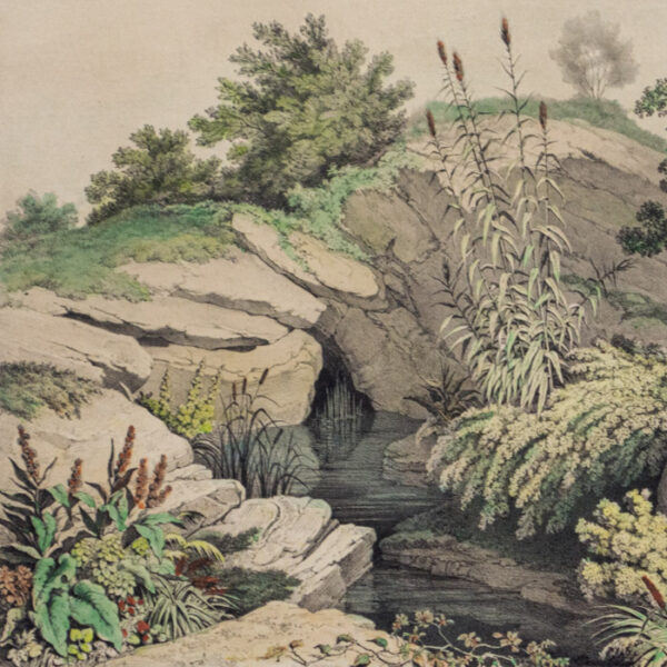 Source of the Spring in the Rample, detail
