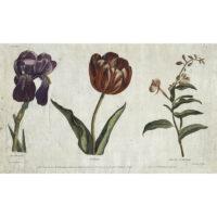 Iris Flambé, Tulippe, Laurier St. Antoine