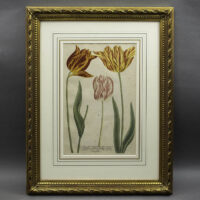 Weinmann Plate 990, Tulips