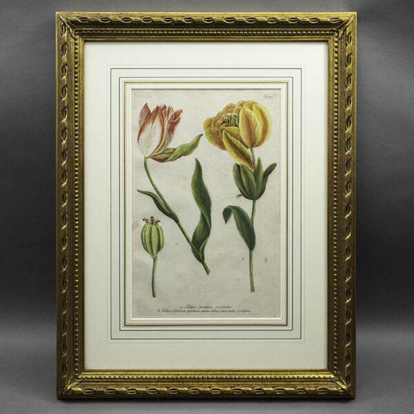 Weinmann Plate 993, Tulips
